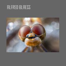 Alfred Blaess